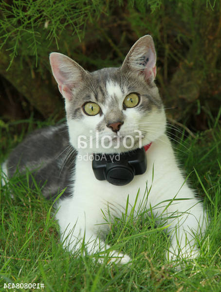 Cloture anti fugue petsafe pour chat