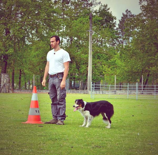 Dressage chien pyrenees orientales : incroyable – exclusif – officiel